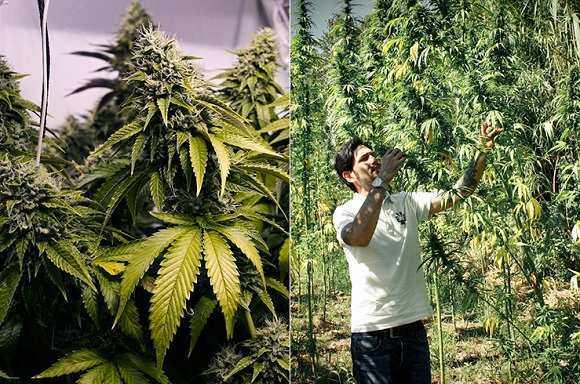 Ли курить коноплю лосины с марихуаной